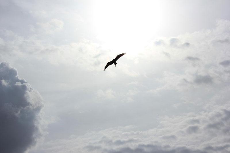bird flying in the sky adrienne-kirk-pregnancy-bereavement-help